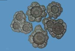 Pegasus Hobbies 28mm painted shell/bomb craters # 5215